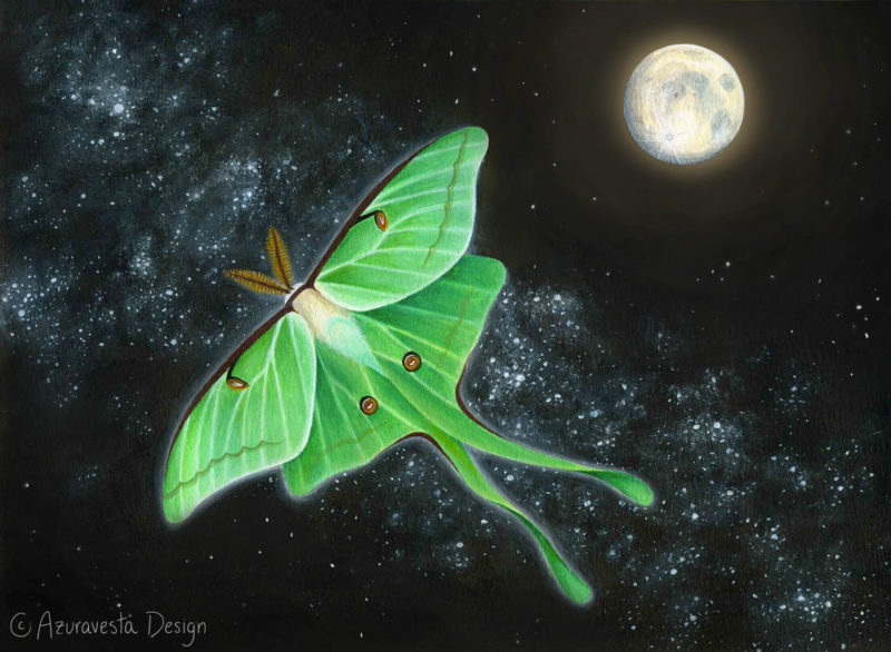The Luna Moth The Full Moon The Spiritual Significance Of Signs
