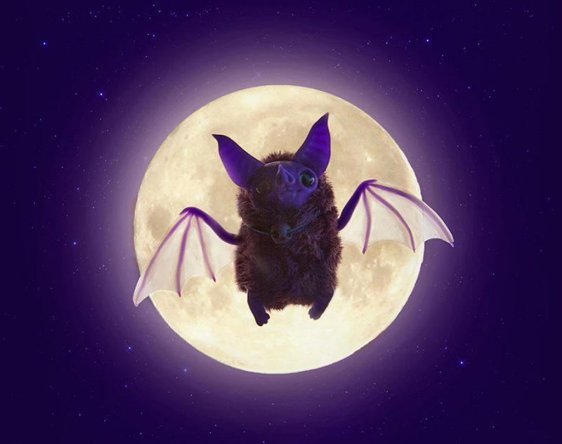 Bats And The Spiritual Meaning Behind Their Presence In Your House
