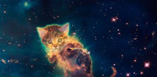 Your Cat Is Not Just A Pet, You Might Be Sharing A Spiritual Connection