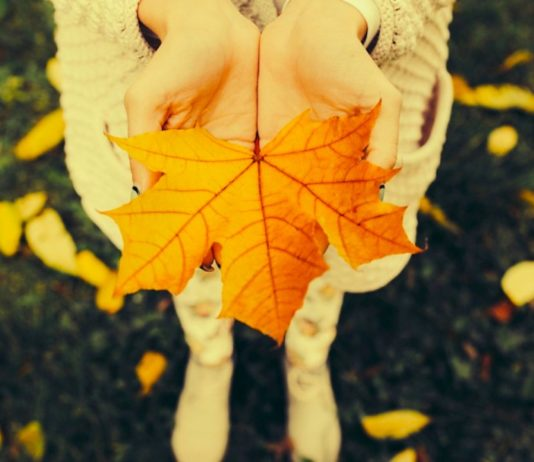 Bring Autumn Harmony Into Your House Through Feng Shui